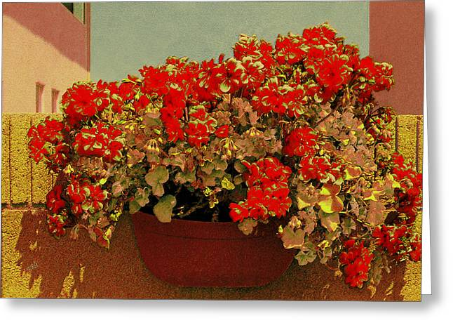 Basket Pot Greeting Cards - Hanging Pot With Geranium Greeting Card by Ben and Raisa Gertsberg