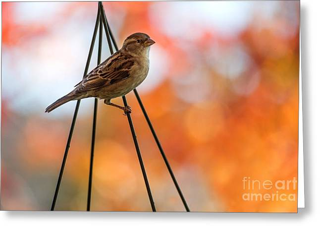 Sparrow Greeting Cards - Hanging Greeting Card by Rebecca Cozart