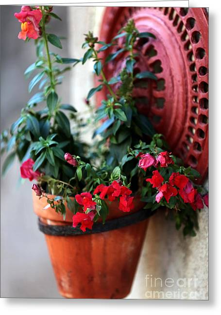 Hanging Planter Greeting Cards - Hanging Red Flowers Greeting Card by John Rizzuto