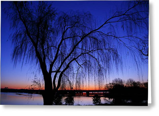 Hanging Tree Sunrise Greeting Card by Metro DC Photography