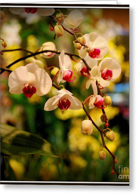 Orchids Digital Art Greeting Cards - Hanging White Orchids Greeting Card by Nancy Mueller