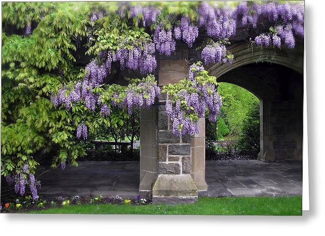 Hanging Wisteria Greeting Card by Jessica Jenney