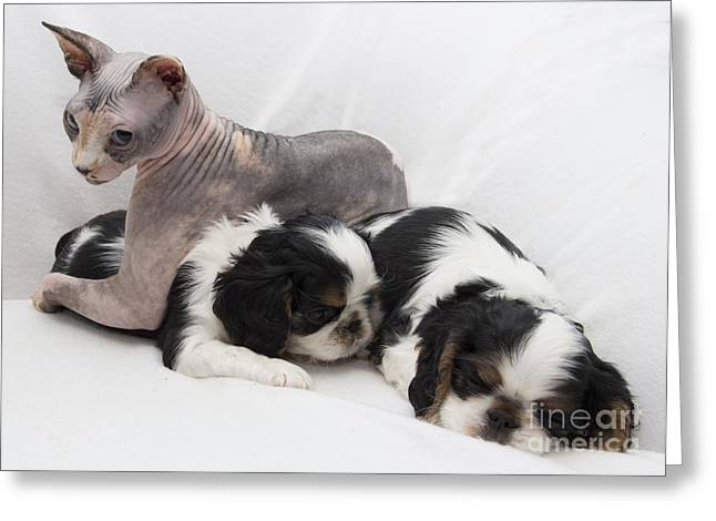 Hanging With The Dogs Greeting Card by Jeannette Hunt