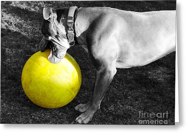 Bully Greeting Cards - Hank and His Big Yellow Horse Ball Greeting Card by Janice Rae Pariza