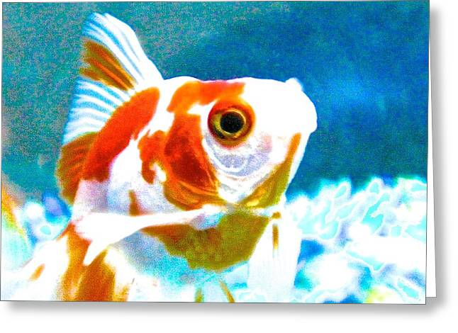 Oranda Greeting Cards - Heil in The Tank Greeting Card by Jacqueline Howe