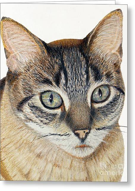 Pussy Drawings Greeting Cards - Hannah Cat Portrait Greeting Card by Jacqueline Barden