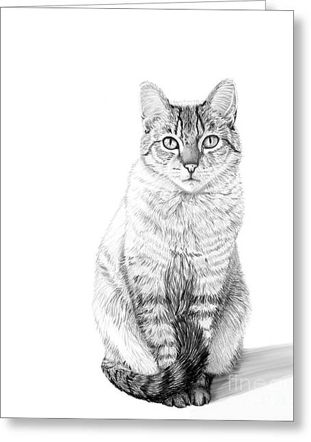 Shelter Kitty Greeting Cards - Hannah -- Digital Charcoal Portrait Greeting Card by Jacqueline Barden