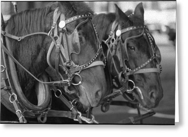 Hansom Cab Greeting Cards - Hansom Cab Horses Greeting Card by Ken West