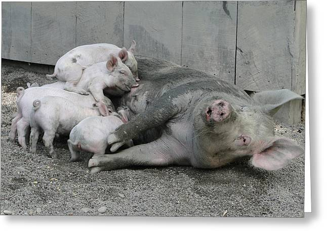 Piglets Greeting Cards - Happier Than Pig In Slop Greeting Card by David Simons