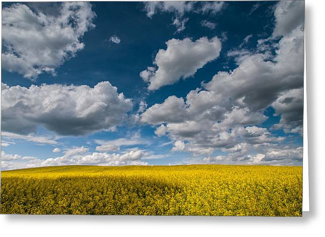 Happiness Greeting Card by Davorin Mance