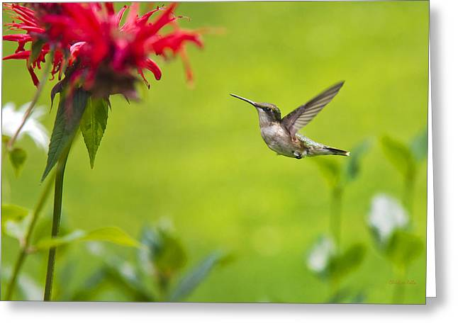 Flying Animal Greeting Cards - Happiness Hummingbird Garden Greeting Card by Christina Rollo