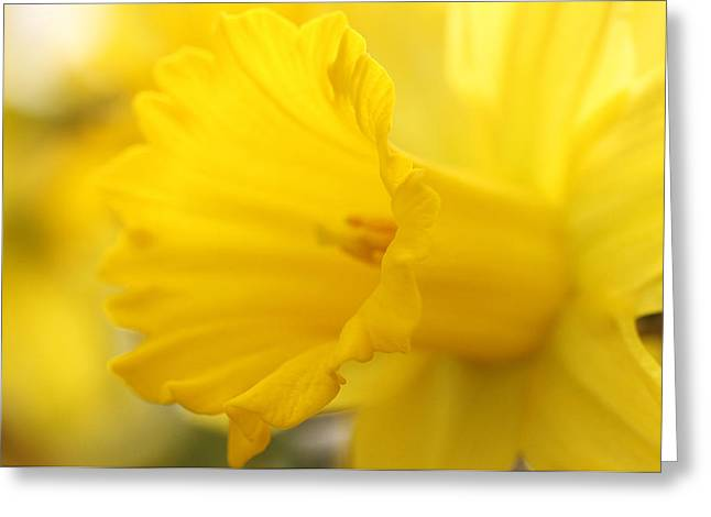 Spring Bulbs Greeting Cards - Happiness Is A Warm Glow Greeting Card by Connie Handscomb
