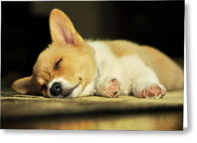 Satisfaction Greeting Cards - Happiness is a Warm Corgi Puppy Greeting Card by Rebecca Sherman