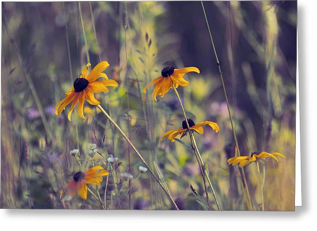 Champs Photographs Greeting Cards - Happiness is in the Meadows - l03 Greeting Card by Variance Collections