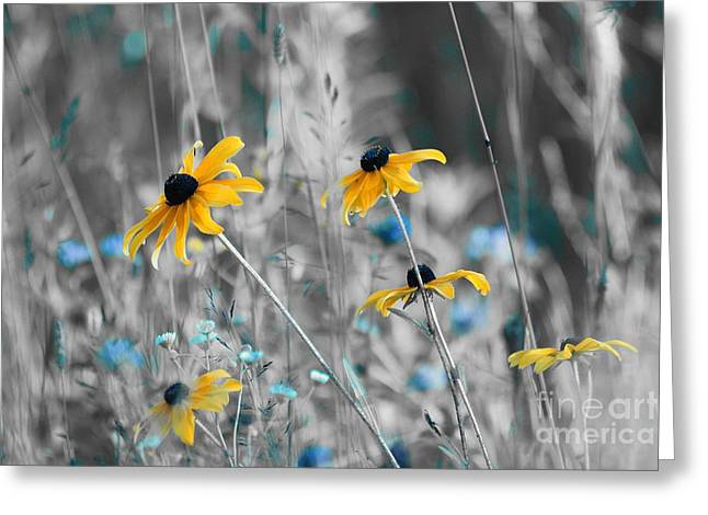 Daisy Greeting Cards - Happiness is in the Meadows - sc02a Greeting Card by Variance Collections
