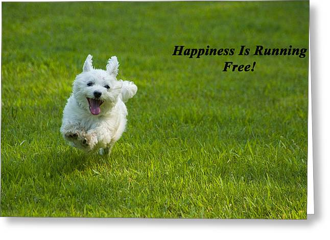 Maltese Photographs Greeting Cards - Happiness Is Running Free Greeting Card by Pat Exum