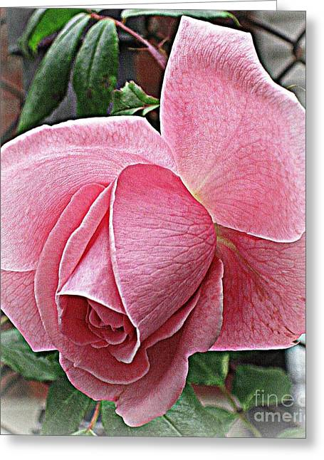 Happiness Greeting Card by Judy Palkimas