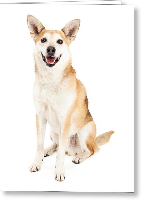 Inu Greeting Cards - Happy Australian Cattle Dog and Shiba Inu Mix Greeting Card by Susan  Schmitz