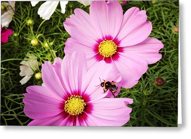 Pretty Flowers Greeting Cards - Happy bee Greeting Card by Les Cunliffe