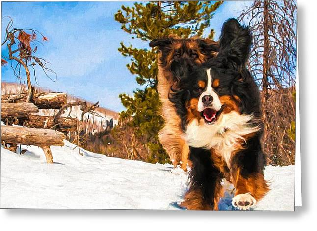 Leonberger Greeting Cards - Happy Bernese Mountain Dog and Leonberger Winter  Greeting Card by Gary Whitton