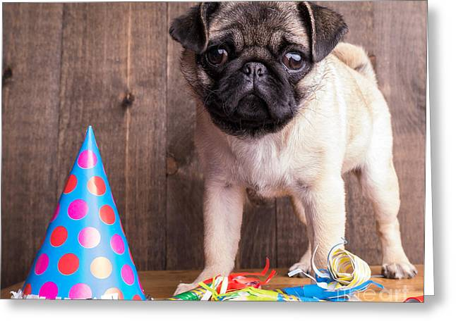 Puppy Dog Eyes Greeting Cards - Happy Birthday Cute Pug Puppy Greeting Card by Edward Fielding