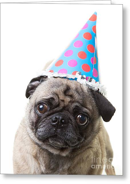 Humourous Greeting Cards - Happy Birthday Pug Card Greeting Card by Edward Fielding