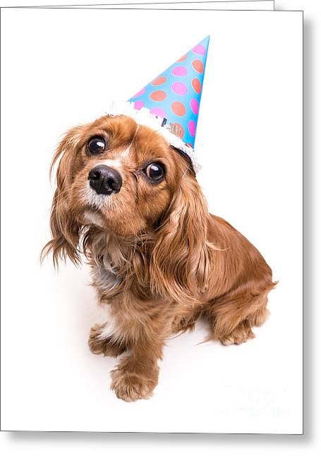 Spaniel Greeting Cards - Happy Birthday Puppy Greeting Card by Edward Fielding