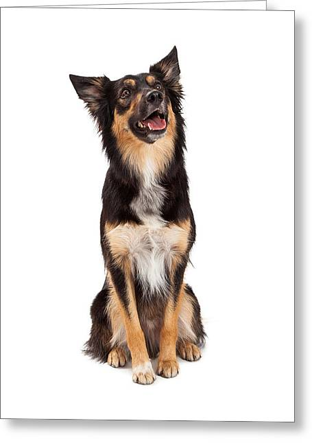 Playful Greeting Cards - Happy Border Collie Crossbreed Looking Up Greeting Card by Susan  Schmitz