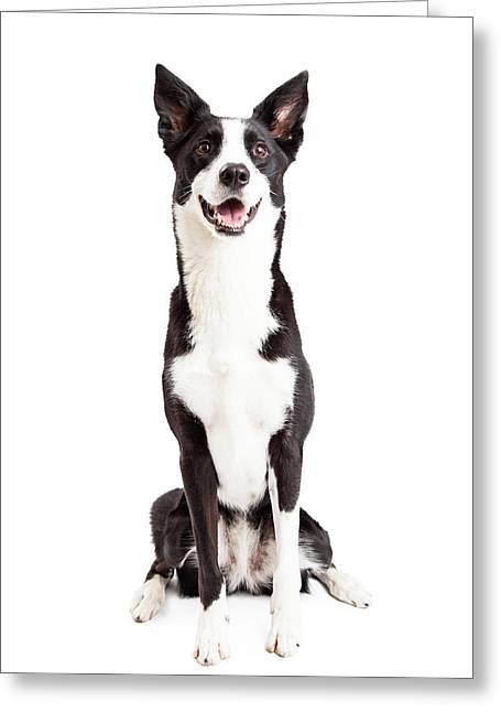 Border Photographs Greeting Cards - Happy Border Collie Mix Breed Dog Sitting Greeting Card by Susan  Schmitz