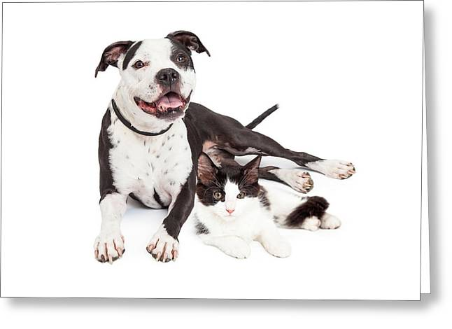 American Shorthair Greeting Cards - Happy Dog and Kitten Together Greeting Card by Susan  Schmitz