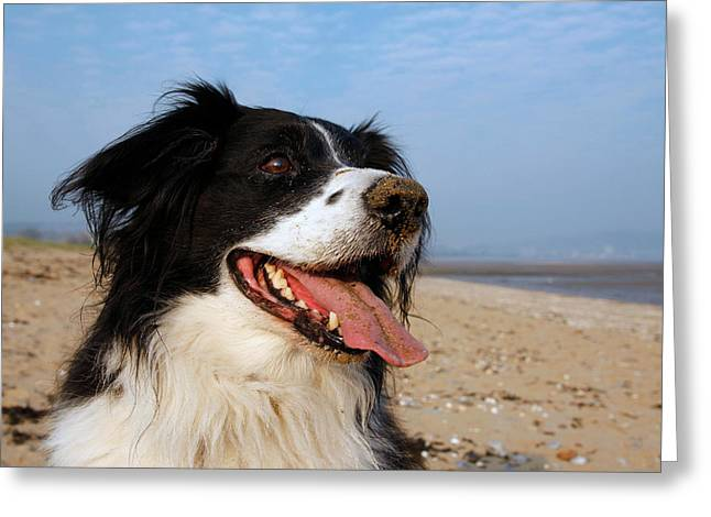 Doggies Greeting Cards - Happy dog Greeting Card by Steve Ball