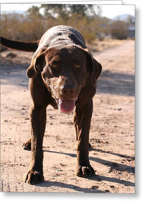 Slobber Greeting Cards - Happy Dog Greeting Card by Wendi Matson