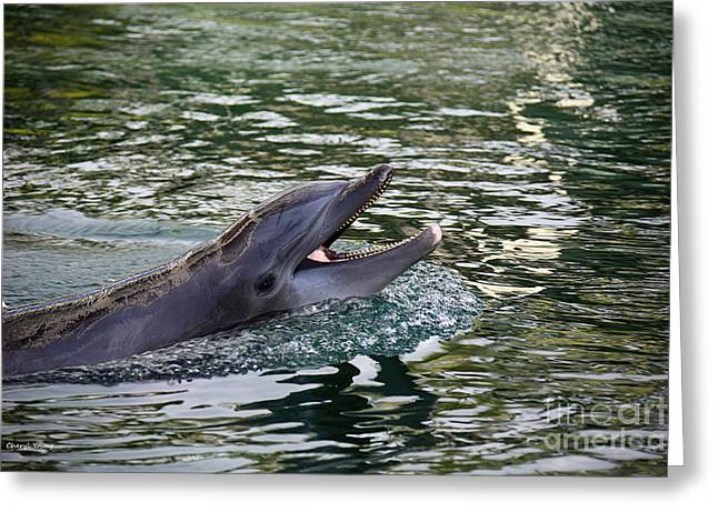Ocean Mammals Greeting Cards - Happy Dolphin Greeting Card by Cheryl Young