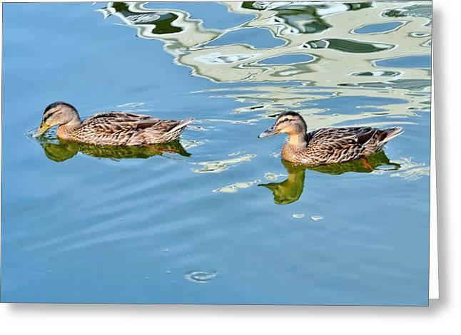 Peaceful Scene Greeting Cards - Happy Ducks Greeting Card by Kim Bemis