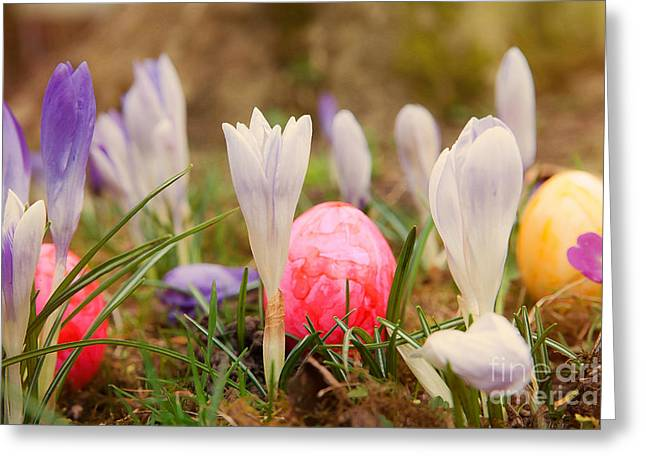 Easter Flowers Greeting Cards - Happy Easter 2 Greeting Card by Christine Sponchia