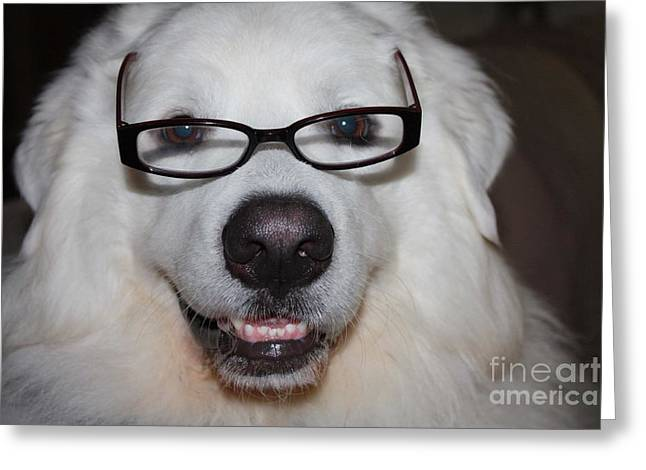 Staring Into Camera Greeting Cards - Happy Great Pyrnesse with His New Reading Glasses Greeting Card by John Telfer