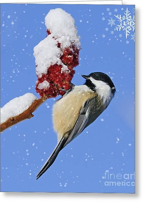 Wildlife Celebration Greeting Cards - Happy Holidays... Greeting Card by Nina Stavlund