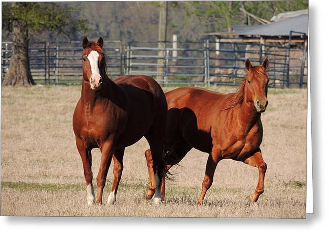Happy Horses Hoofin-it Greeting Card by Kim Pate