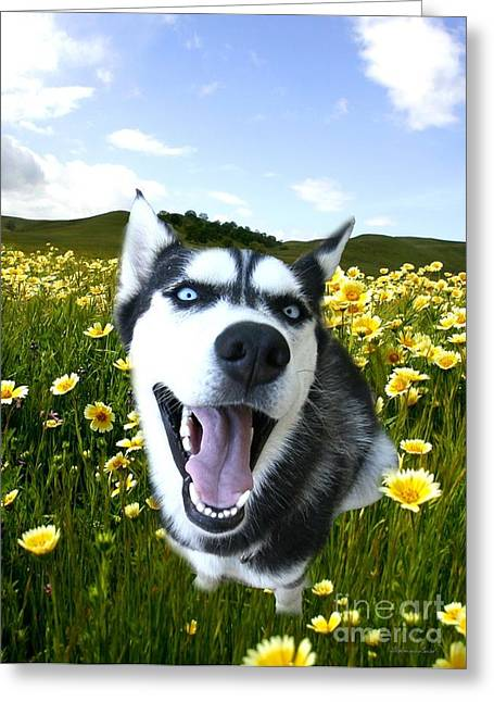 Happy Husky Greeting Card by Stephanie Laird
