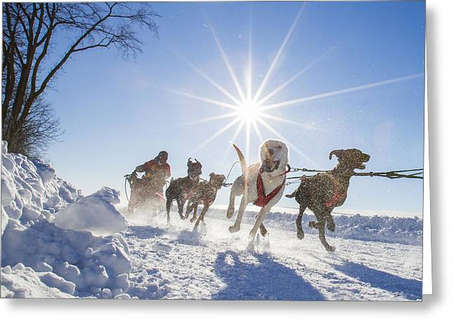 Husky Greeting Cards - Happy K9 Athletes Greeting Card by Mircea Costina Photography