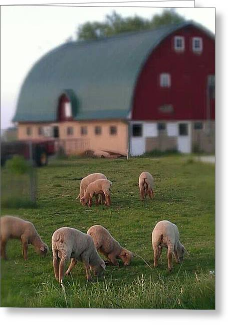 Barn Yard Greeting Cards - Happy Little Sheep Greeting Card by Sherry Barcelo