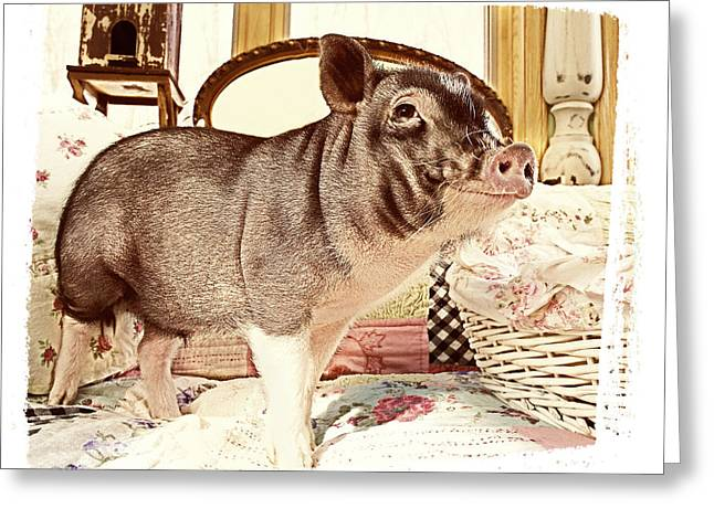 Potbelly Pig Greeting Cards - Happy Pig Greeting Card by Susan Stone