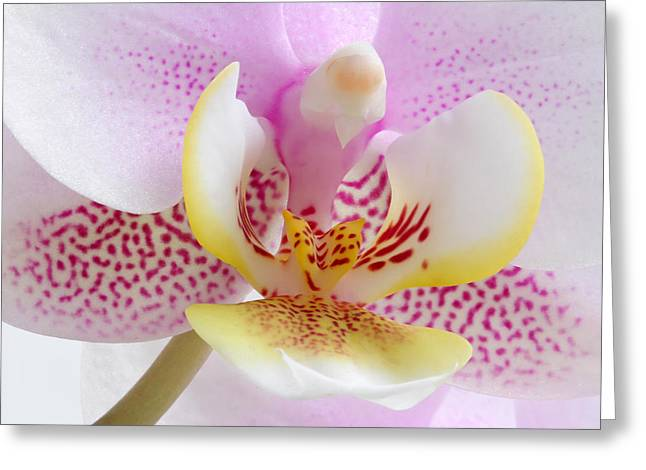 Orchid Canvas Greeting Cards - Happy Pink Greeting Card by Juergen Roth