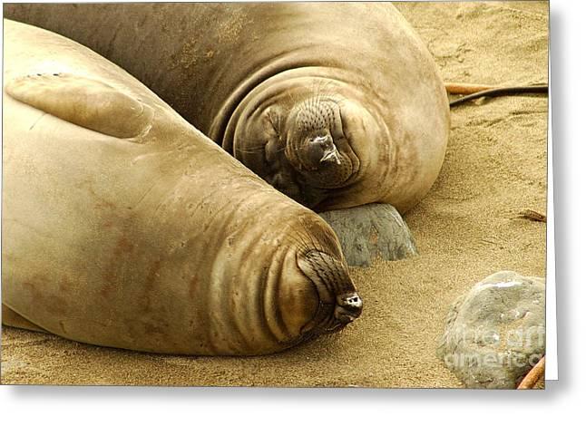 Happy Seals Greeting Card by Micah May
