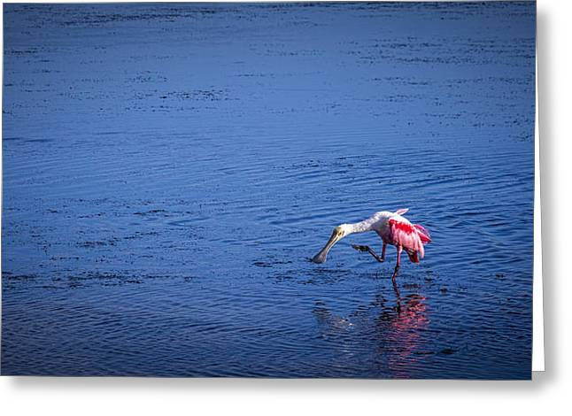 Wading Bird Greeting Cards - Happy Spoonbill Greeting Card by Marvin Spates