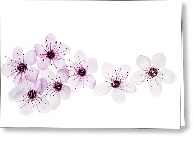 Cherry Blossoms Photographs Greeting Cards - Happy Spring Greeting Card by Rebecca Cozart