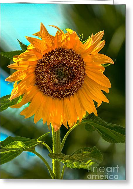 Haybale Greeting Cards - Happy Sunflower Greeting Card by Robert Bales