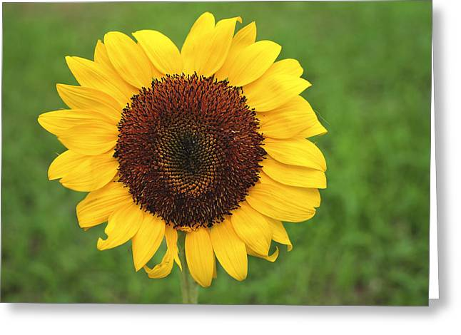 Baby Room Greeting Cards - Happy Sunflower Greeting Card by Terry DeLuco