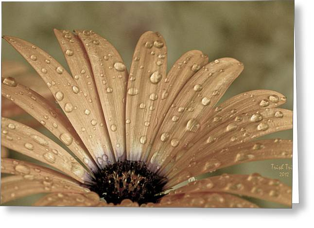 Happy To Be A Raindrop Greeting Card by Trish Tritz