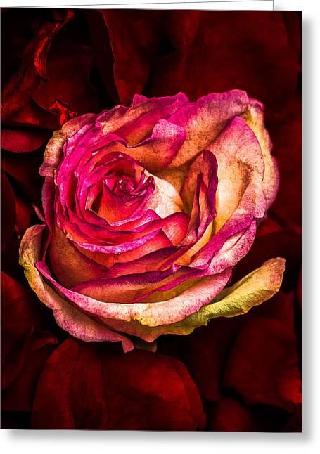 Happy Valentine's Day - 1 Greeting Card by Alexander Senin